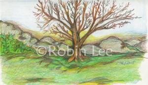 Big Bad Tree jan 11 2015